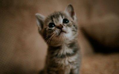 Приучаем котенка ходить в лоток