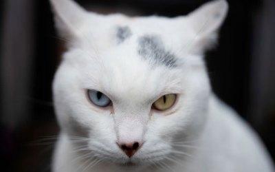 15 милых и необычных фото котиков