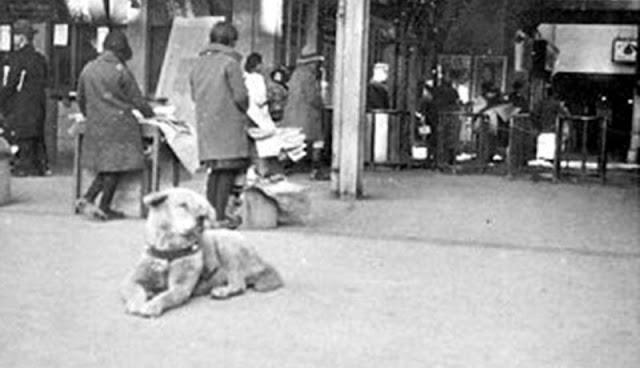 Архивные фотографии знаменитой собаки по имени Хатико