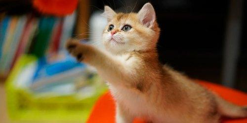 Почему кошке нравится кошачья мята?