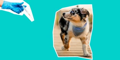 Насколько важно вакцинировать собаку