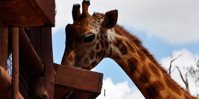 Посещение приюта, выставки, зоопарка