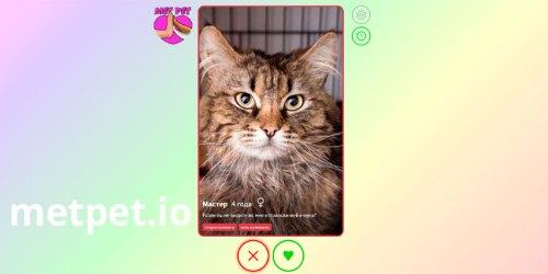 metpet.io - найди себе друга перелистывая фото животных из приюта