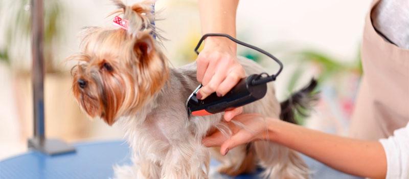 Выбираем качественную машинку для стрижки собаки