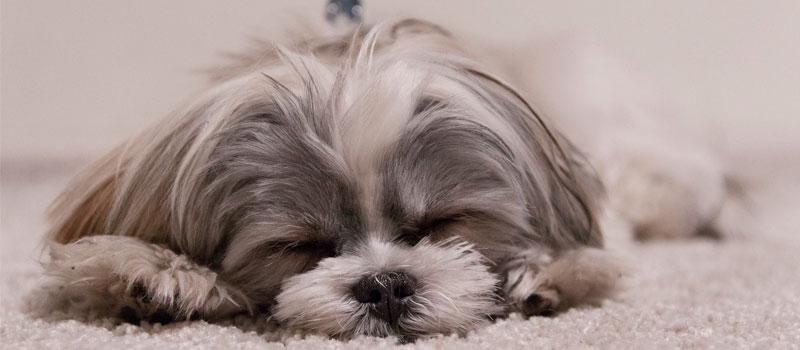 Как правильно посчитать возраст собаки. Новый стандарт опроверг старый подсчет.