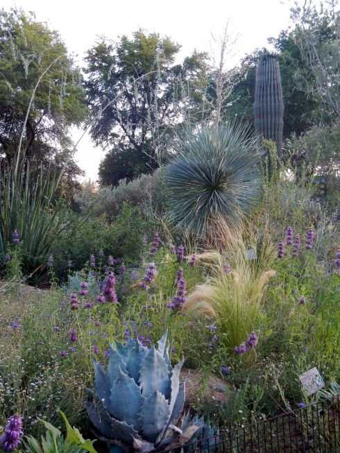 Scottsdale Botanical Gardens