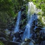 Tooloona Creek Curcuit Lamington National Park