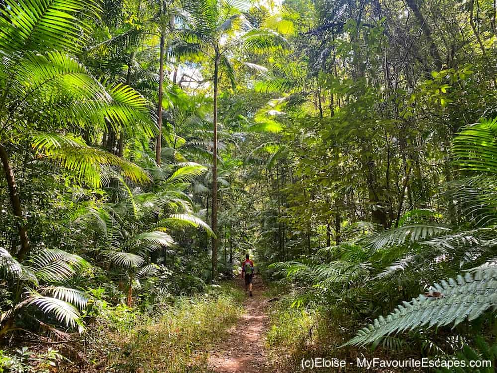 Man walking in the forest on the Gheerulla Valley Circuit in Mapleton National Park