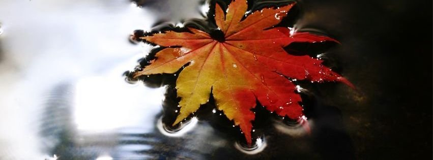 Fall Leaf Rain Puddle Facebook Timeline Covers Facebook