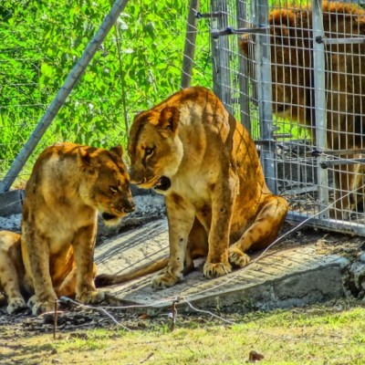 Activity: animal safari