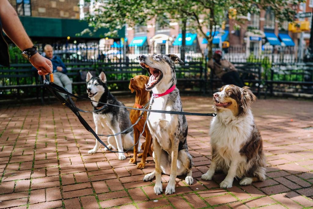 Easy Ways To Make Extra Money Every Month By Being a Dog Walker - My Financial Hill