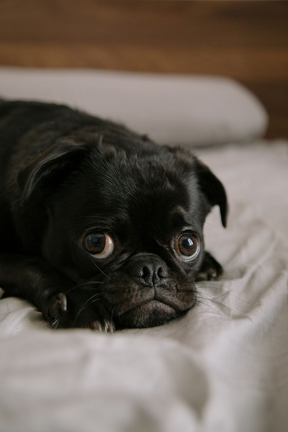 Anti-Diarrhea Treatment For Dogs - Essential For A Happy and Healthy Pet - My Financial Hill