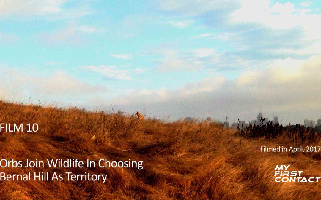 Orbs Join Wildlife In Choosing Bernal Hill As Territory