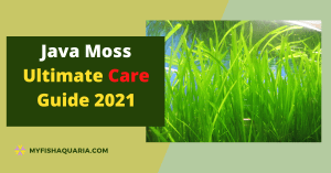 Java Moss Ultimate Care Guide 2021
