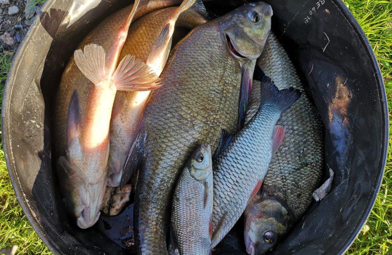 MFT ® – Une nouvelle belle journée de pêche en Saône