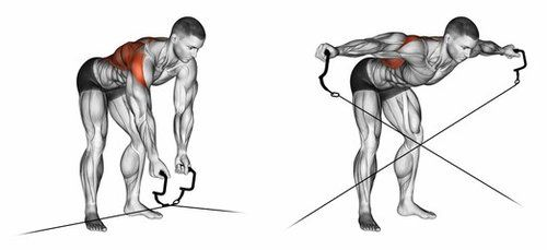 Bent Over Dumbbell Lateral Raises cable