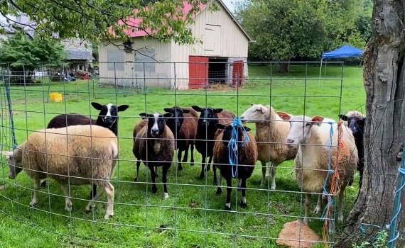 Day Spring Farm Episode