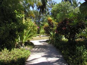 Дорожки на острове