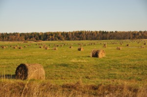 Затянувшаяся уборка сена в Тверской области