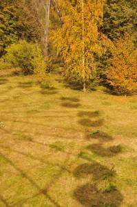 Тень от колеса обозрения на желтеющей траве