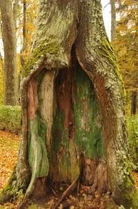 Могучие деревья в парке