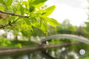Каналы в парке
