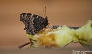 Бабочка-крапивница