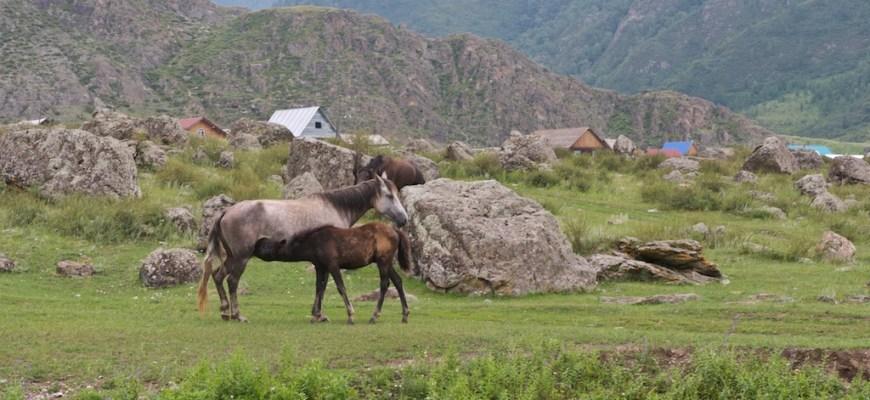 Большое путешествие по Алтаю
