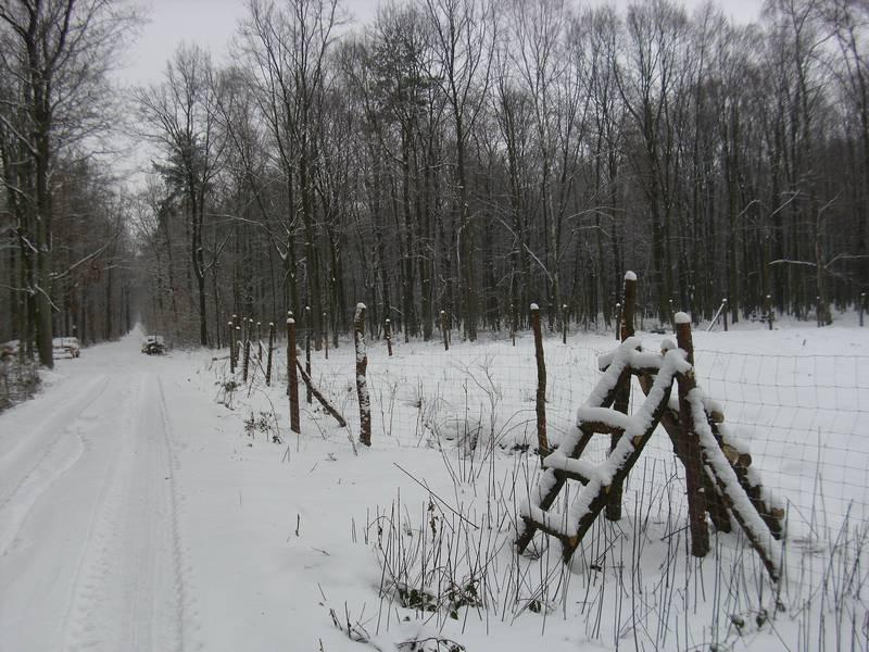 Leśna droga 2