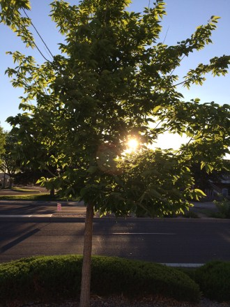 I love a good tree shot