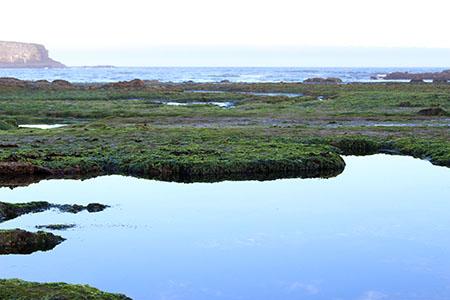 reflective tidepool