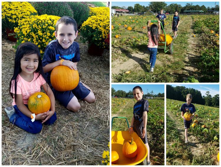 North Carolina Pumpkin Patch