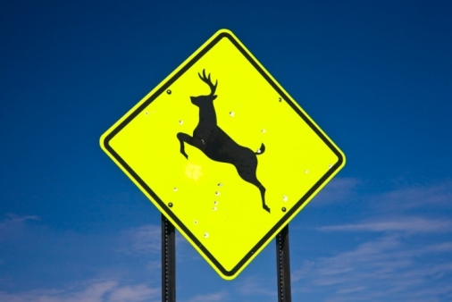 Deer crossing (Stock Photo)