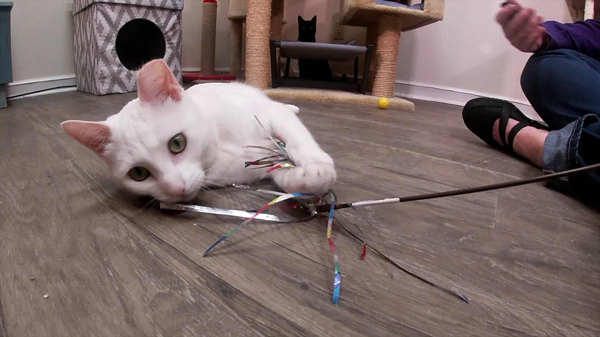 Sparkle Cat Rescue works to get cats adoption-ready with Jackson Galaxy 'Cat Pawsitive' program.