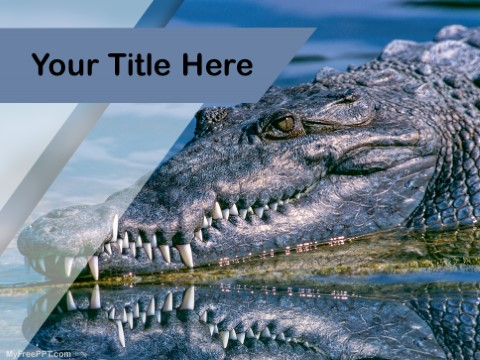 Free Alligator PPT Template