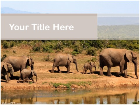 Free Animals Herd PPT Template