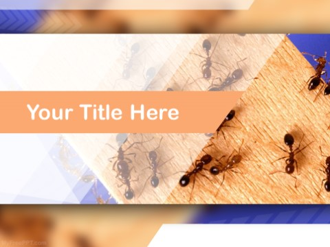 Free Ants PPT Template