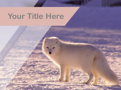 Free Arctic Fox PPT Template