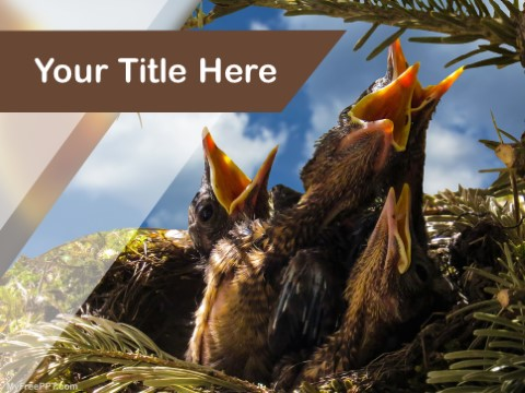 Free Bird Feeding PPT Template