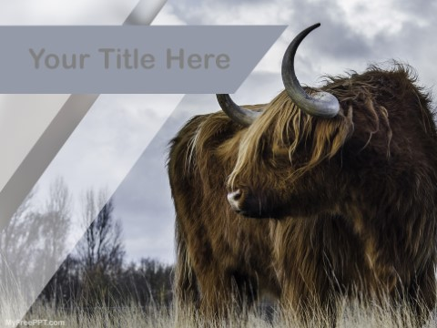 Free Brown Buffalo PPT Template