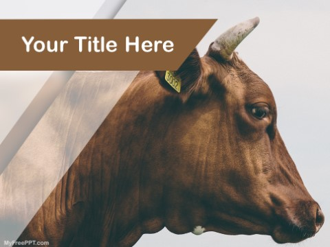 Free Brown Cow PPT Template