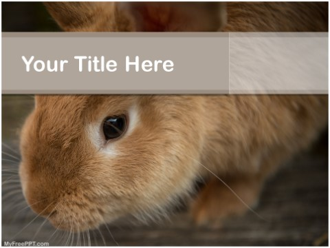 Free Brown Rabbit PPT Template