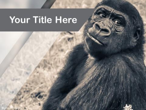 Free Chuimpanzee PPT Template