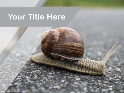 Free Close Up Of Snail On Ground PPT Tem