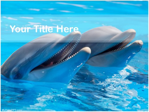 Free Dolphins PPT Template