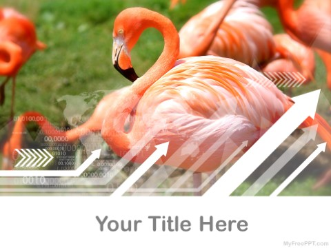 Free Flamingo PPT Template