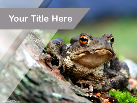 Free Frog PPT Template