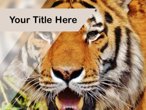 Free Hunting PPT Template