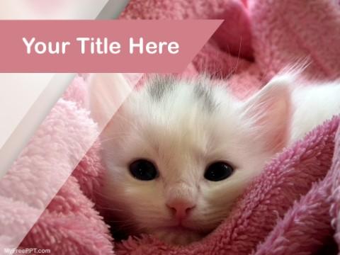 Free Kitten PPT Template
