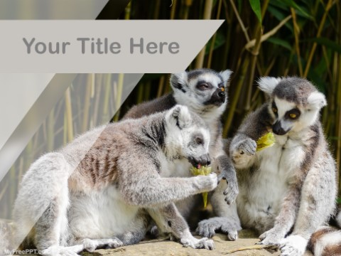 Free Lemur PPT Template